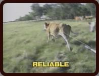 Reliable StockDoctor II™